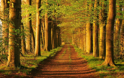 forest trees wallpaper