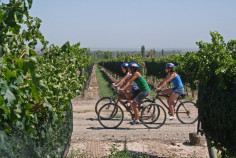 Wine touring on bikes